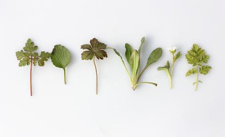 Jak hodować zioła i kiełki?
