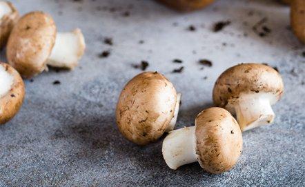Jak przygotować grzyby tuż po zebraniu?